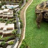 🐢Turtle for scale! . #scalemodel #forscale #maqueta #arquitectura #turtle #scalemodeling #scalemodel #onlymaquette #architecture #arquimaquetas #maquetas #modelismo #modelism #maquette #scalemodeling #maquetisme #maqueta #maquetaarquitectura